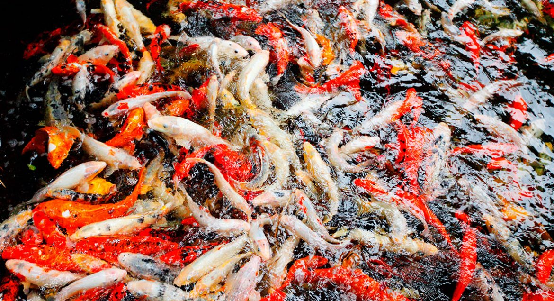 Enduratank - tanks for aquaculture