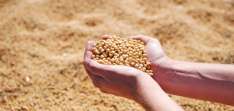 Benefits of Feeding Soybean Oil