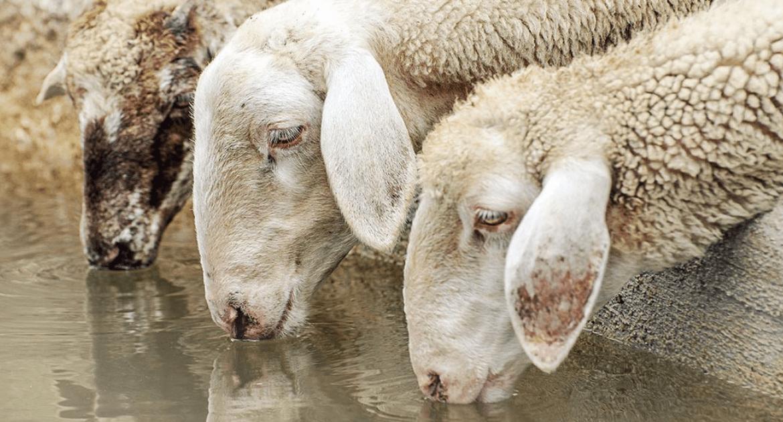 Livestock Water Management