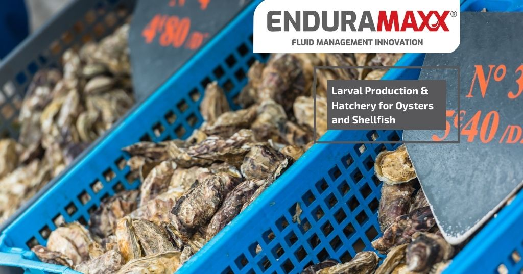 Enduramaxx Larval Production & Hatchery for Oysters and Shellfish
